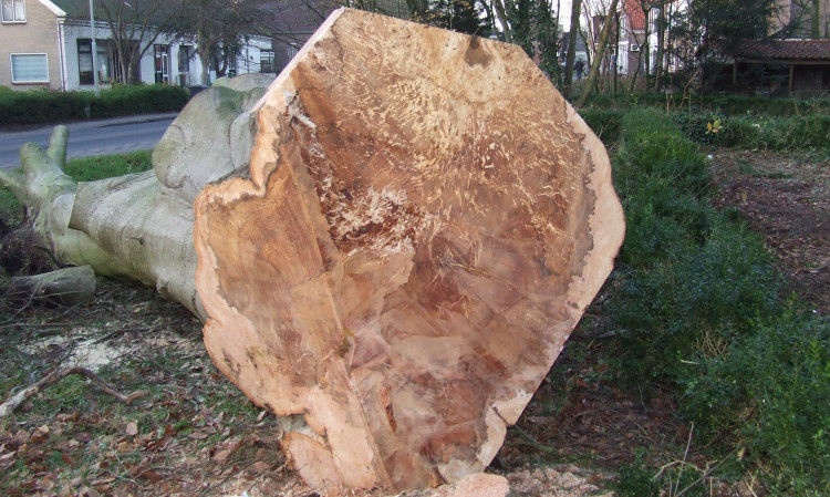 VTA (Controle boomveiligheidscontrole)
